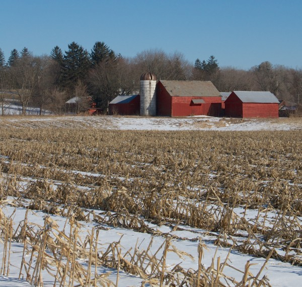 Cornfield with snow and barn
